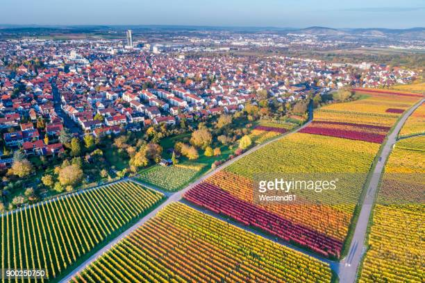germany, stuttgart, aerial view of vineyards at kappelberg in autumn - stuttgart stock pictures, royalty-free photos & images