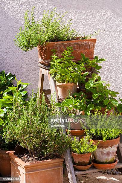 Germany, Stuttgart, Potted herbs in garden