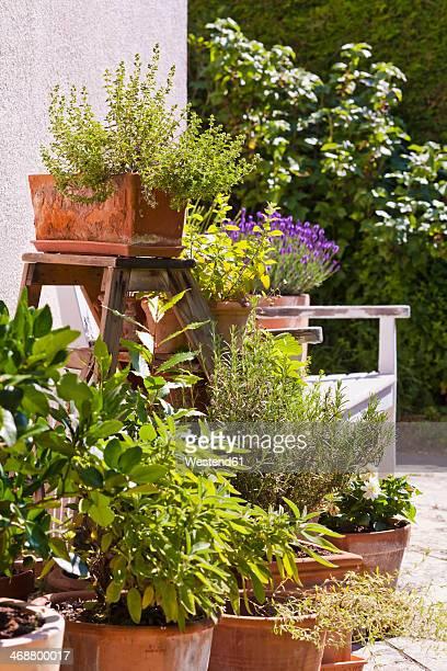 Germany, Stuttgart, Potted herbs in garden