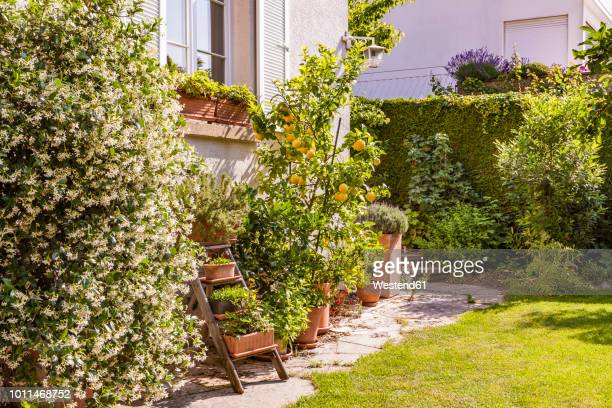 germany, stuttgart, potted plants in front of house - pot plant stock pictures, royalty-free photos & images
