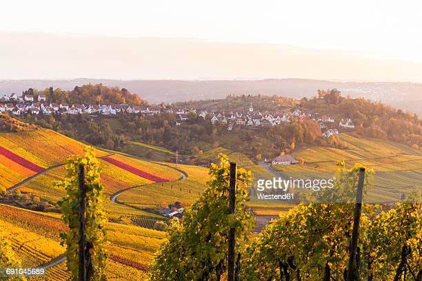 Germany, Stuttgart-Rotenberg, Autumnal vinyards
