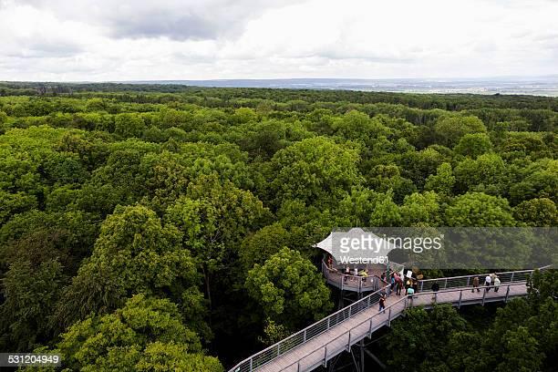 germany, thuringia, hainich, canopy walkway hainich - nationalpark bildbanksfoton och bilder
