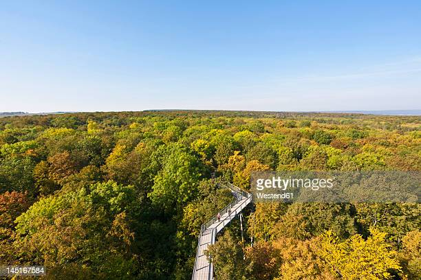 Germany, Thuringia, Hainich, View of Hainich National Park