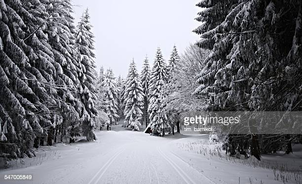 Germany, Thuringia, View along snowy forest trail