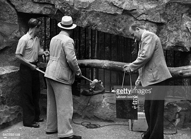 Germany Tiergarten German movies of the 1930ies Wolf enclosure in the Berlin Zoo: sound recording of howling for a movie - Photographer Hans Reinke -...