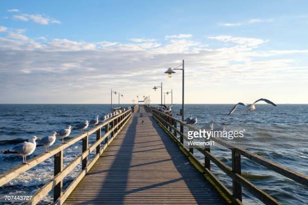 germany, usedom, bansin, seagulls at pier - ウセドム ストックフォトと画像