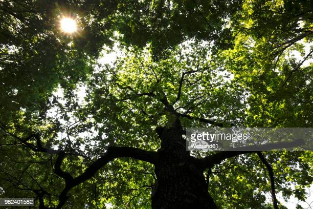 Germany, view to tree top at sunlight