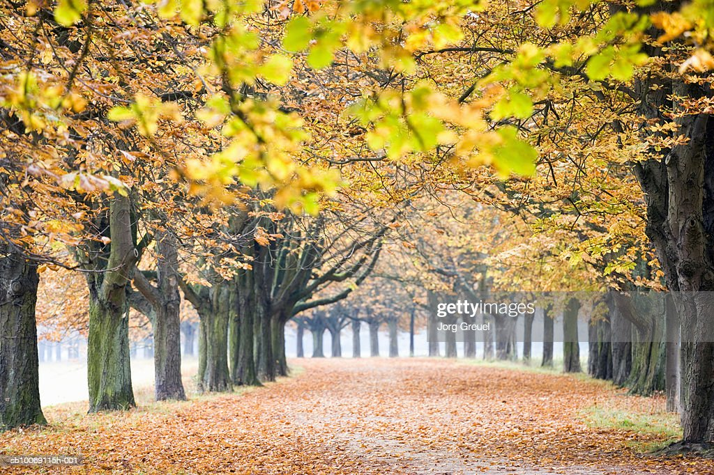 Germany, Westphalia, North-Rhine, Cologne, Chestnut trees in autumn : Stockfoto