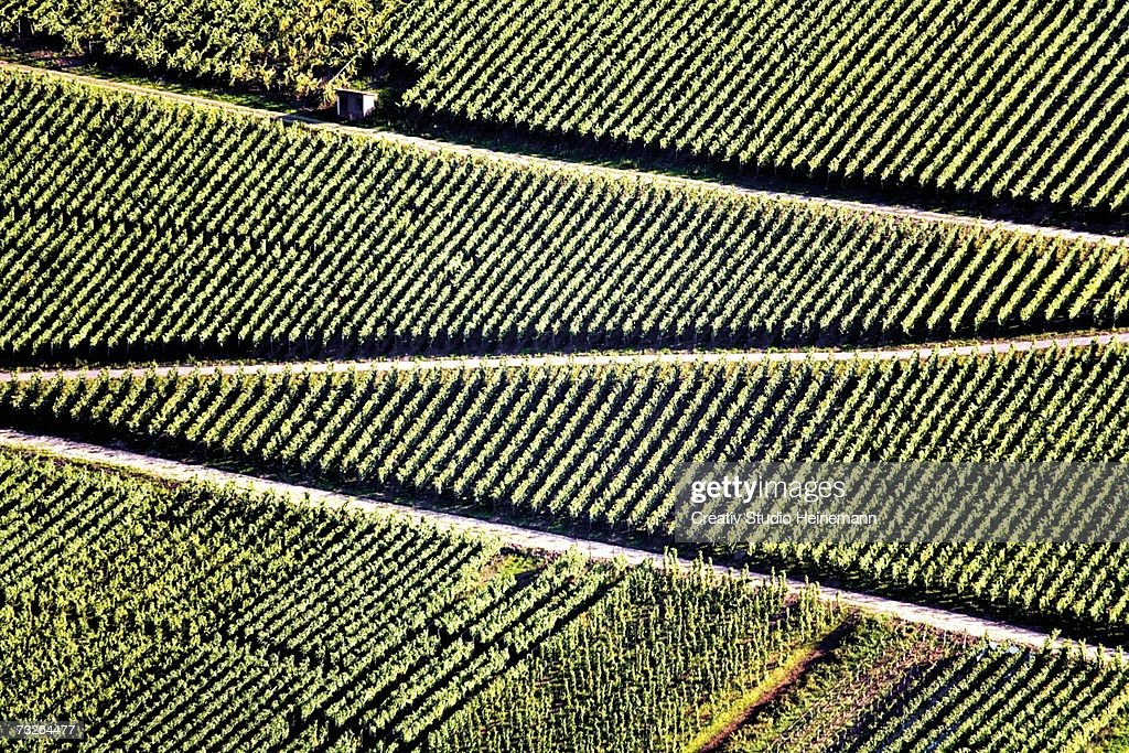 Germany, winegrowing near Mosel river : Stock Photo