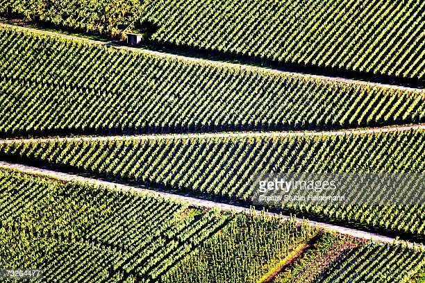 Germany, winegrowing near Mosel river
