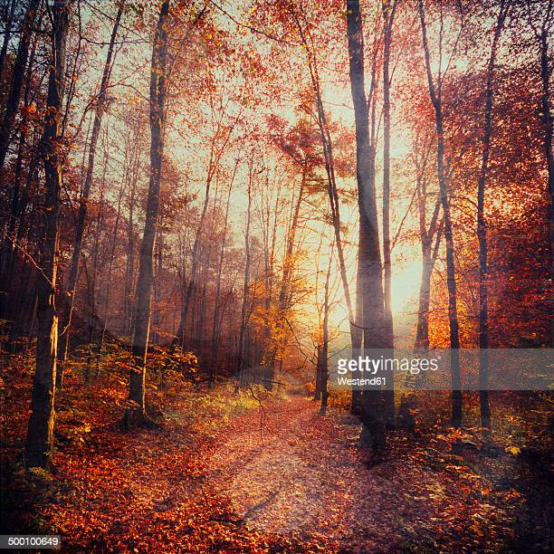 Germany, Wuppertal, deciduous forest in autumn against the sun