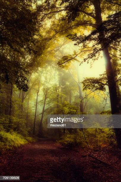 Germany, Wuppertal, forest path