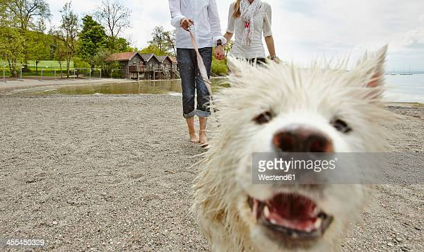 Germany, Young couple walking with dog