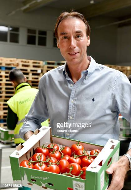 Gerrit van Schoonhoven, CEO of Werder Frucht GmbH, holds a crate of tomatoes in his hands in Gross Kreutz, Germany, 5 August 2016. The company does...