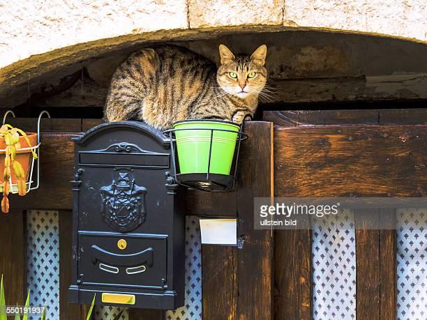 Gestreifte Katze sitzt wartend auf einem Briefkasten