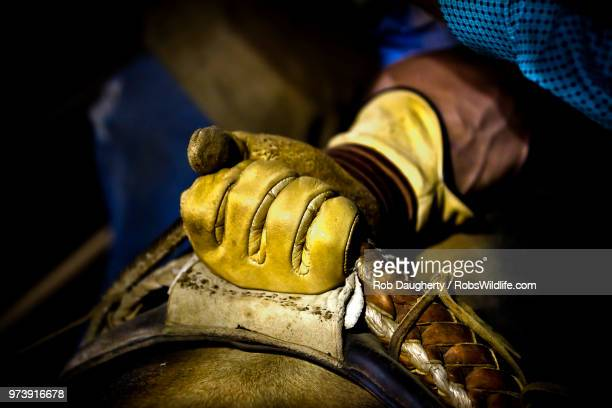 get a grip - bull riding stock pictures, royalty-free photos & images