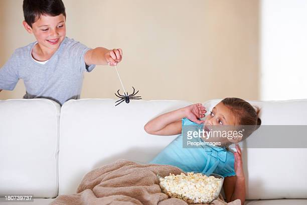 get it away!!! - spider stock pictures, royalty-free photos & images