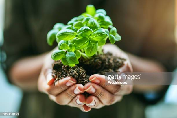 get sowing, get growing - seedling stock pictures, royalty-free photos & images