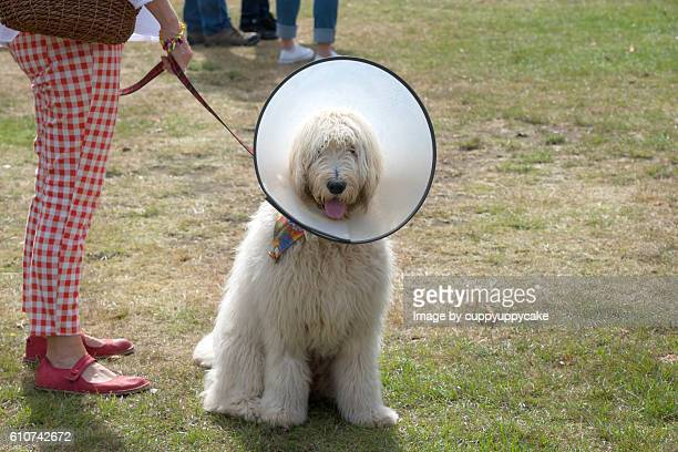 get well soon - cone shape stock photos and pictures