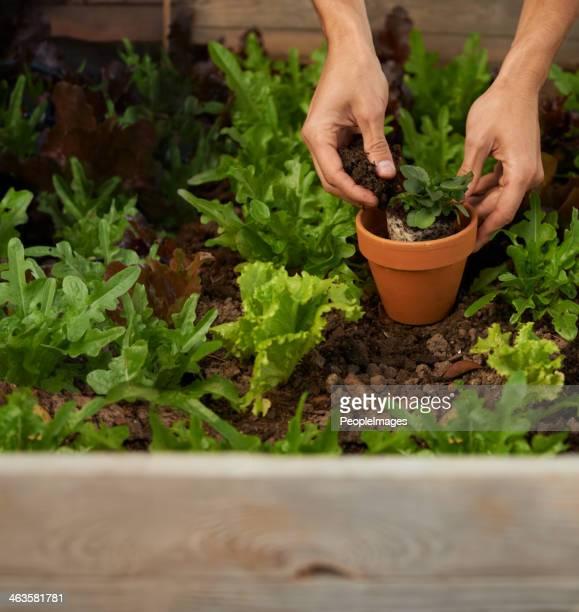 Getting back to nature through gardening
