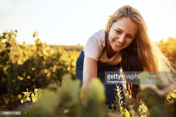 getting up close and personal with her crops - ripe stock pictures, royalty-free photos & images
