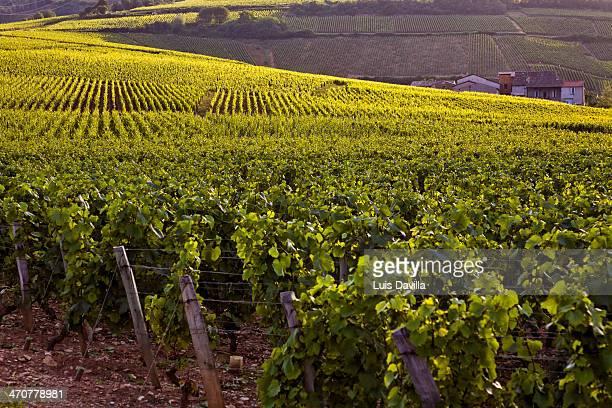 gevrey-chambertin vineyards