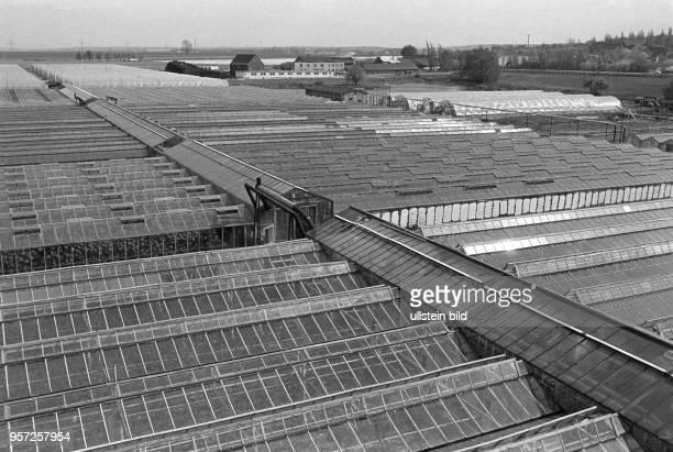 Gewächshäuser der GPG Glück auf Eisleben aufgenommen im Mai 1982 in der Lutherstadt Eisleben