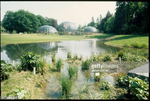 Gewächshäuser im Botanischen Garten Zürich 1986