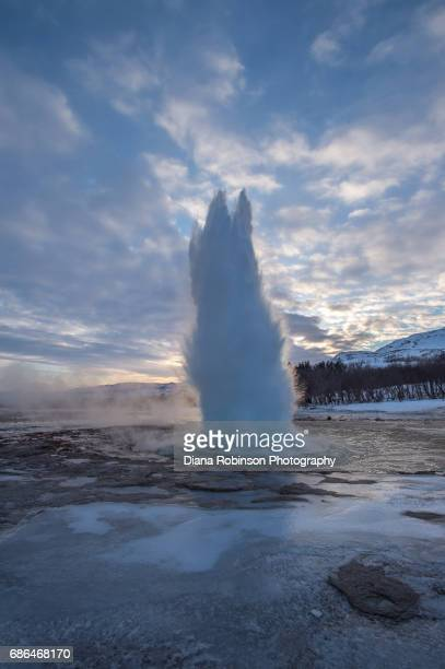 geyser erupting, thingvellir national park, iceland - thingvellir stock photos and pictures