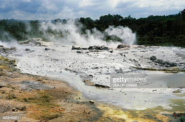 Geyser Roturoa District North Island New Zealand