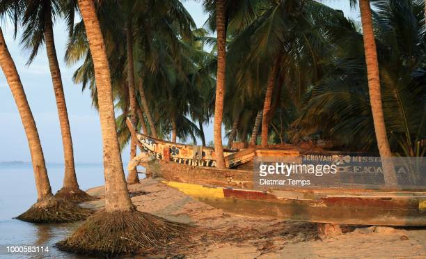 ghana, canoes and palm trees - dietmar temps stock photos and pictures