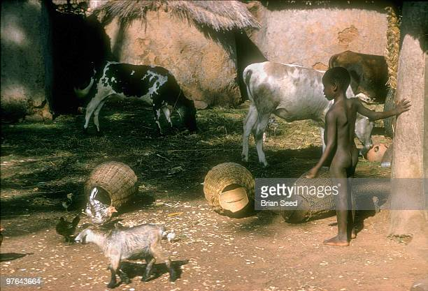 Ghana naked boy in farmyard with animals and round buildings with thatched roofs