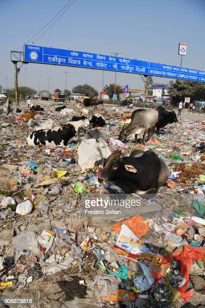 Ghazipur is a neighborhood in East Delhi It has been one of the largest dumping site for Delhi Landfill has grown so much over the past years that it...