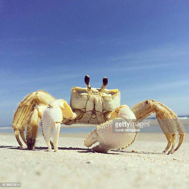 Ghost Crab and Blue Sky