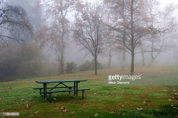 ghostly trees in fog - laguna niguel stock pictures, royalty-free photos & images