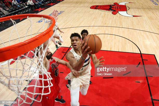 Giannis Antetokounmpo of the Milwaukee Bucks goes to the basket against the Chicago Bulls on January 28 2018 at the United Center in Chicago Illinois...
