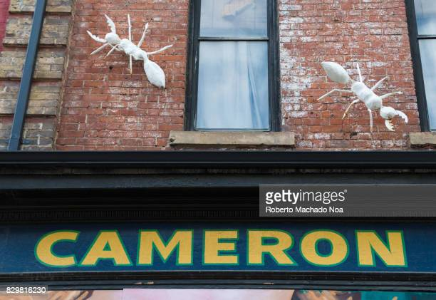 Giant ants decorating a building exterior at Cameron House The house is a cultural hub with bar services in the heritage neighbourhood of Queen...
