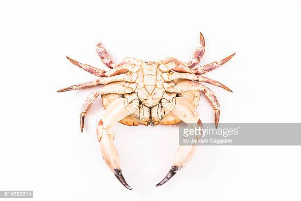 giant atlantic crab - jacopo caggiano stock pictures, royalty-free photos & images