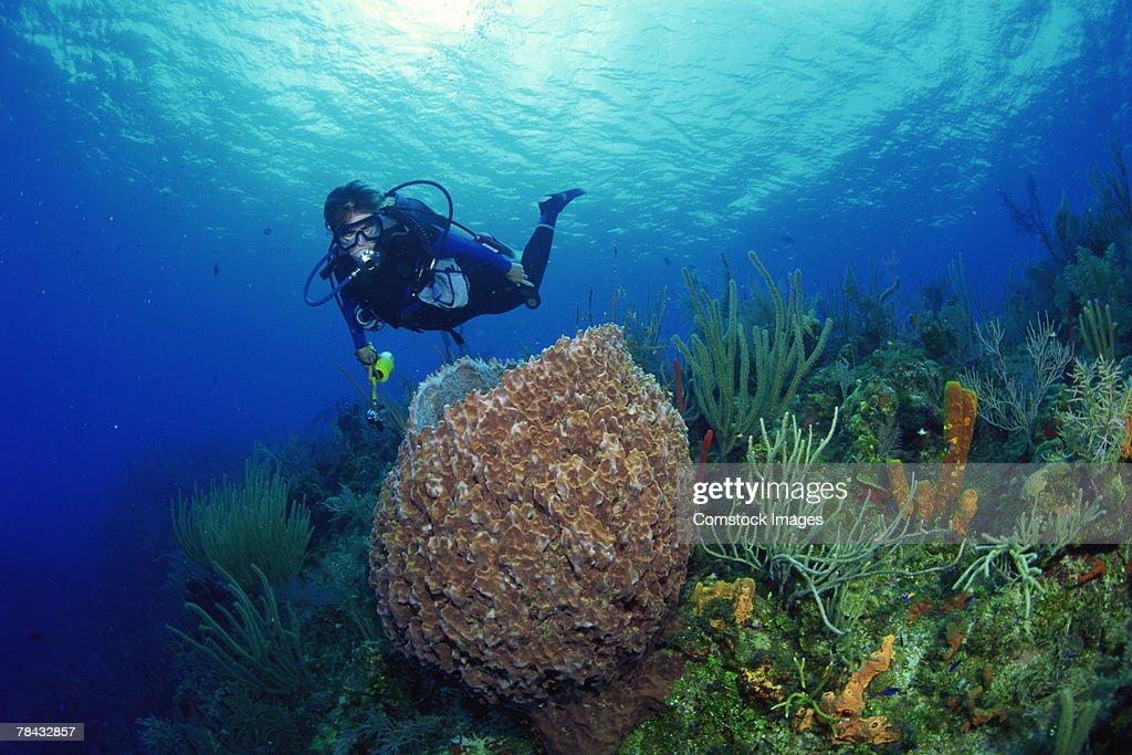 Giant Barrel Sponge and diver , underwater : Stockfoto