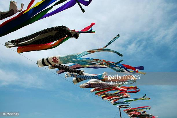 Giant carp kites are flown in Japan every May 5th, on Children Day . Carps are symbols of sons, and the kites are flown proudly from Japanese houses...