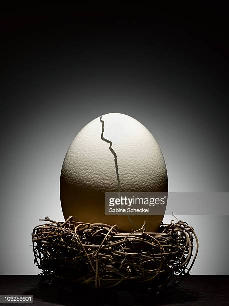 giant cracked ostrich egg in nest