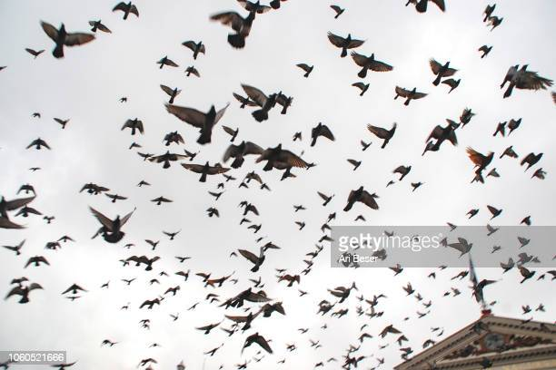 Giant flock of birds in Central America