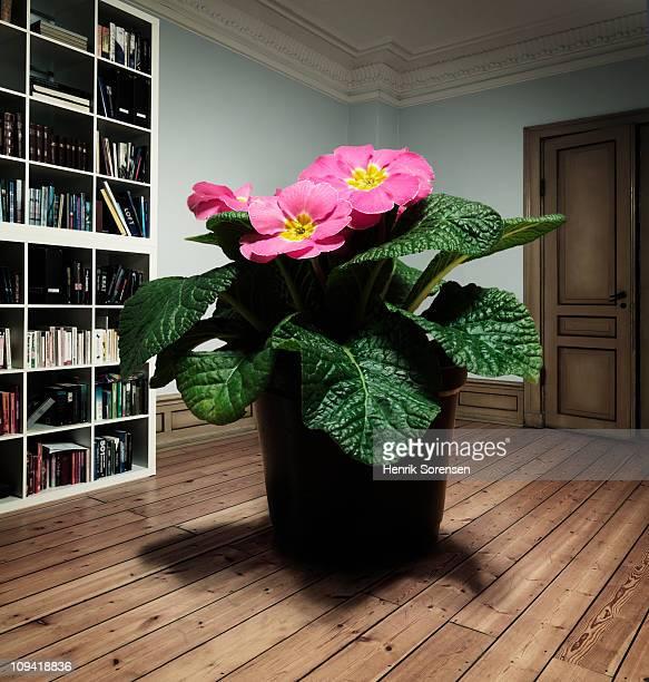 Giant flower pot plant standing on the floor
