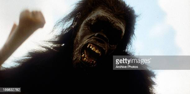 A giant gorilla in a scene from the film '2001 A Space Odyssey' 1968