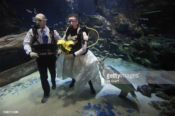 Giant green sea turtle takes a bite of aquarist Kathryn O'Connor's dress during a blessing with her partner James Oliver on Valentine's Day in the...