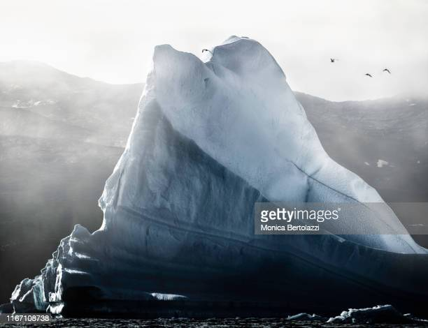 giant iceberg in the fog - zeevogel stockfoto's en -beelden