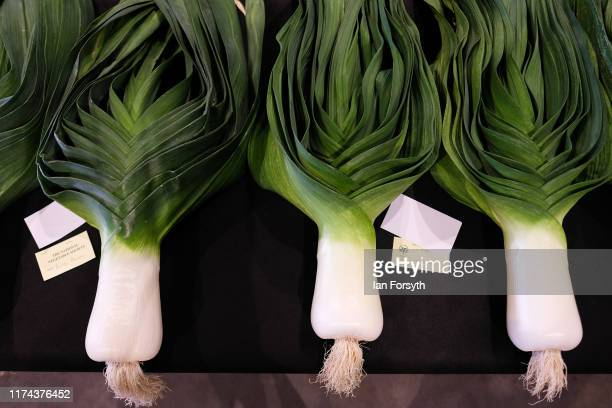 Giant leaks are displayed ahead of judging for the giant vegetable competition at the Harrogate Autumn Flower Show on September 13 2019 in Harrogate...