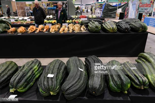 Giant marrow are displayed ahead of judging for the giant vegetable competition at the Harrogate Autumn Flower Show on September 13 2019 in Harrogate...