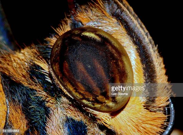 giant owl eyes - bug eyes stock photos and pictures