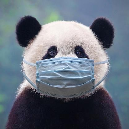 Giant panda bear wearing a face mask 1214992320